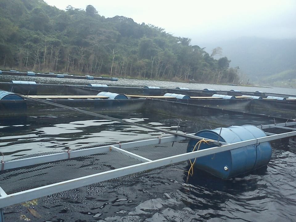 Jaulas flotantes de cachamas en represa canoabo for Jaulas flotantes para piscicultura